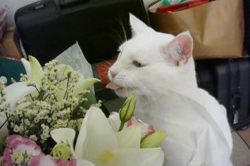 Loves flowers...